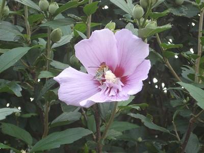 http://www.yamabuki-greenfarm.jp/blog/%EF%BD%8B%EF%BC%8DDSCO1918DSC01918.jpg