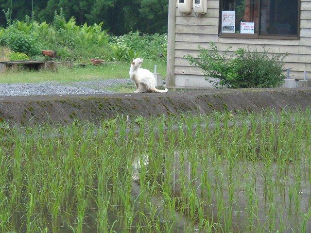 http://www.yamabuki-greenfarm.jp/blog/s-DSC01818.jpg