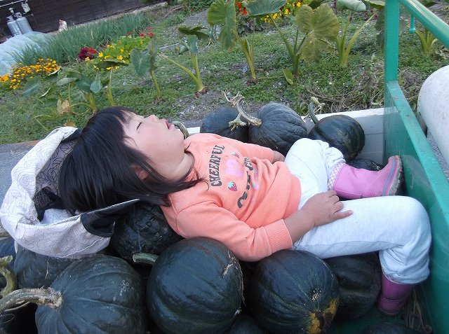 http://www.yamabuki-greenfarm.jp/blog/s-DSCF1508.jpg