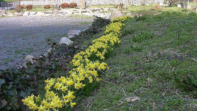 http://www.yamabuki-greenfarm.jp/blog/s-PIC_0172.jpg