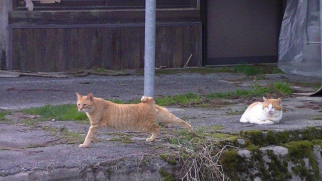 http://www.yamabuki-greenfarm.jp/blog/s-PIC_0185.jpg