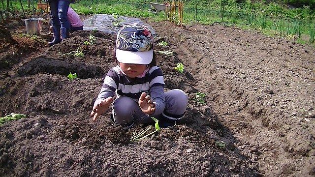 http://www.yamabuki-greenfarm.jp/blog/s-PIC_0344.jpg