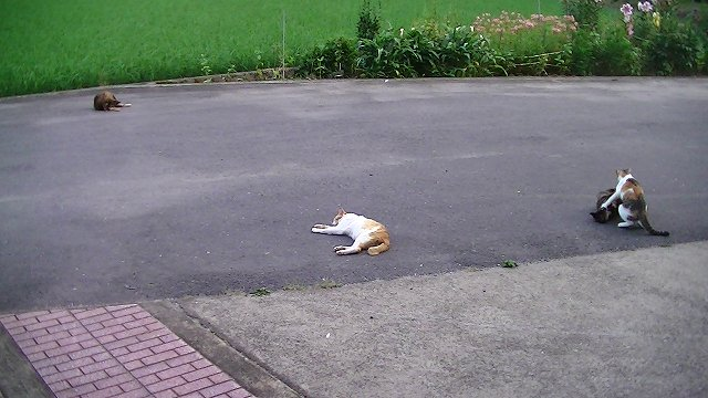 http://www.yamabuki-greenfarm.jp/blog/s-PIC_0551.jpg