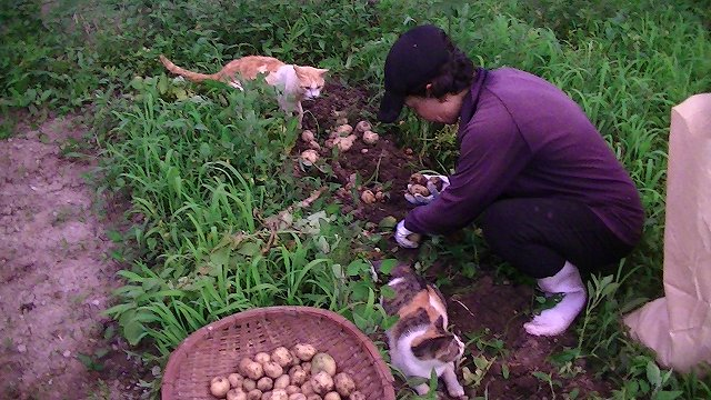 http://www.yamabuki-greenfarm.jp/blog/s-PIC_0589.jpg