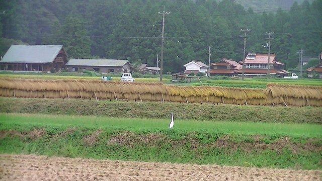 http://www.yamabuki-greenfarm.jp/blog/s-PIC_1188.jpg