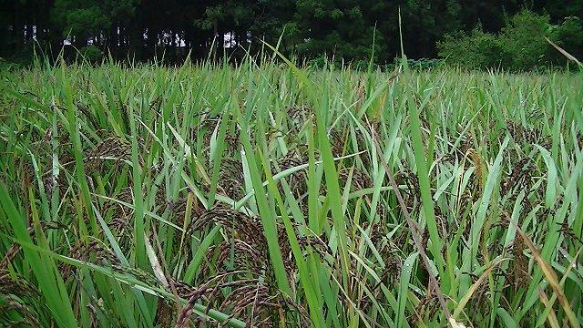 http://www.yamabuki-greenfarm.jp/blog/s-PIC_1228.jpg