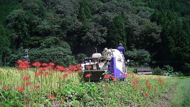 http://www.yamabuki-greenfarm.jp/blog/s-PIC_1239.jpg