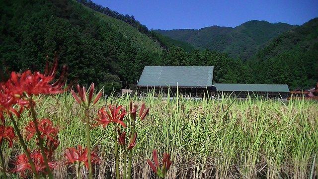 http://www.yamabuki-greenfarm.jp/blog/s-PIC_1241.jpg
