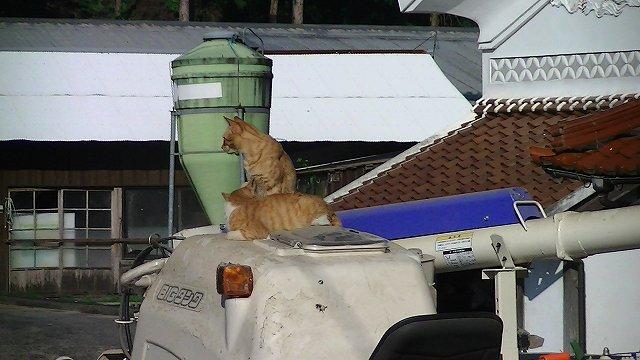 http://www.yamabuki-greenfarm.jp/blog/s-PIC_1259.jpg