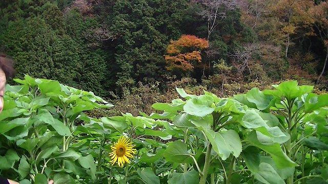 http://www.yamabuki-greenfarm.jp/blog/s-PIC_1809.jpg